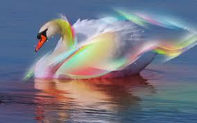 RainbowSwann